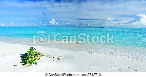 Paraíso tropical - csp3542713