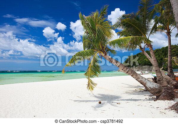 paraíso tropical - csp3781492