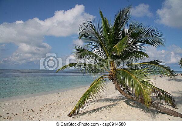 Paradise beach - csp0914580
