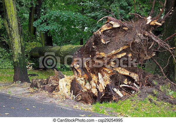 parc, arbre, après, déraciné, orage - csp29254995