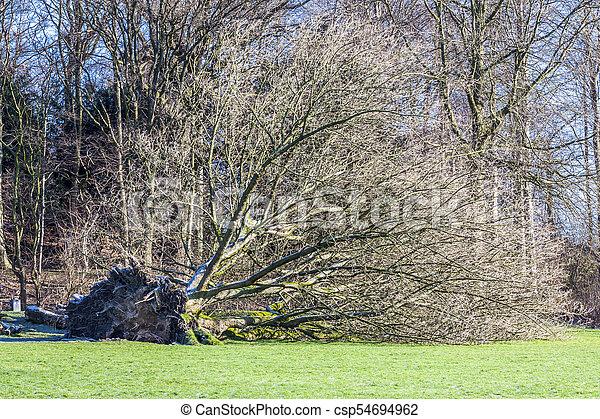 parc, déraciné, allemagne, arbre - csp54694962