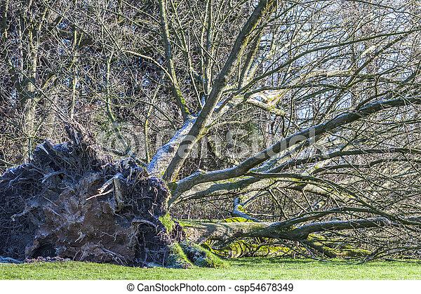 parc, déraciné, allemagne, arbre - csp54678349