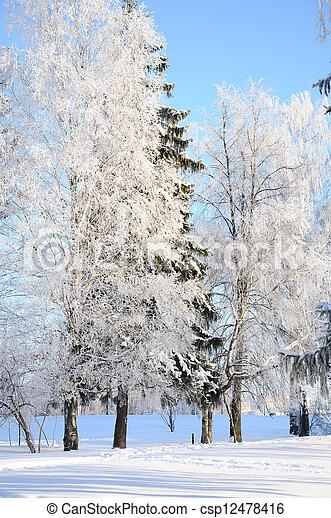 parc, ensoleillé, hiver, jour - csp12478416