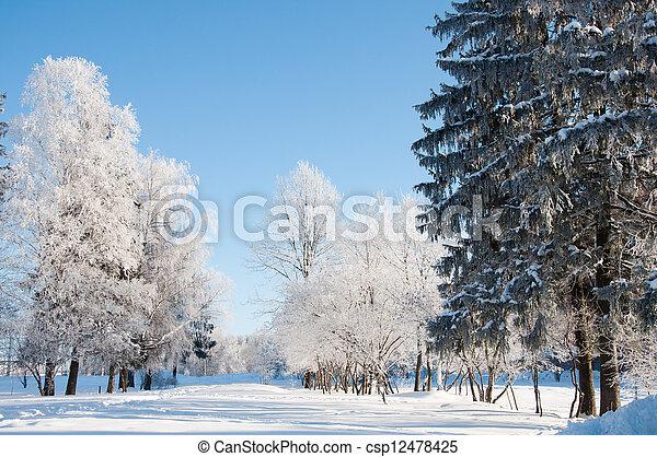 parc, ensoleillé, hiver, jour - csp12478425