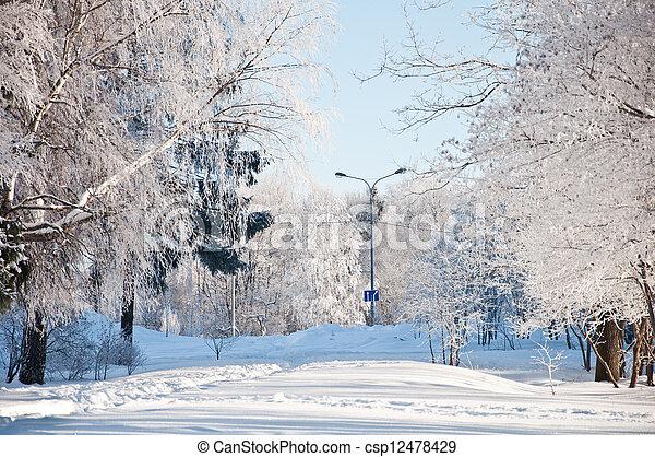 parc, ensoleillé, hiver, jour - csp12478429
