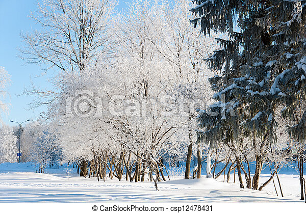 parc, ensoleillé, hiver, jour - csp12478431