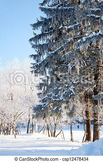 parc, ensoleillé, hiver, jour - csp12478434