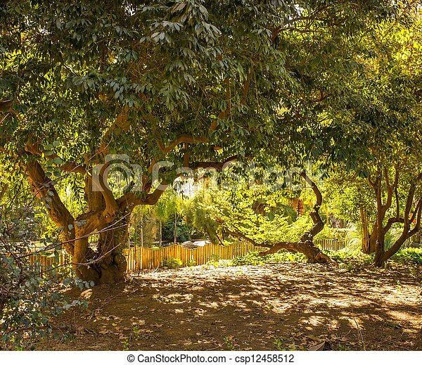 parc, jour ensoleillé, arbres - csp12458512