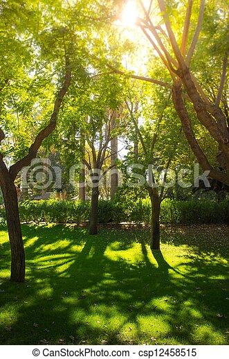parc, jour ensoleillé, arbres - csp12458515