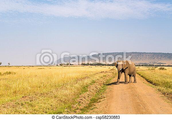 parc, safari, éléphant - csp58230883