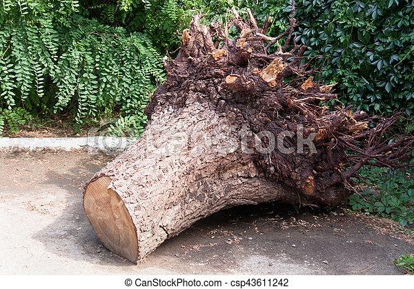 parc, souche, arbre déraciné - csp43611242
