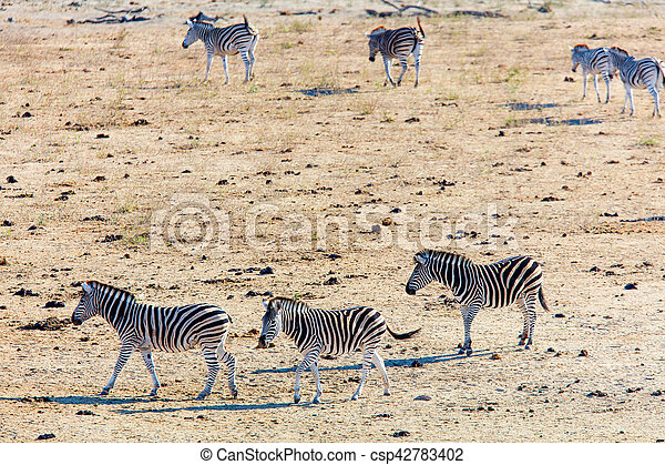 parc, zèbres, safari - csp42783402