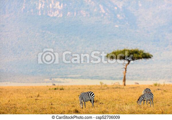 parc, zèbres, safari - csp52706009