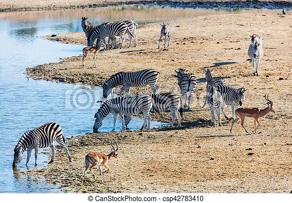 parc, zèbres, safari - csp42783410