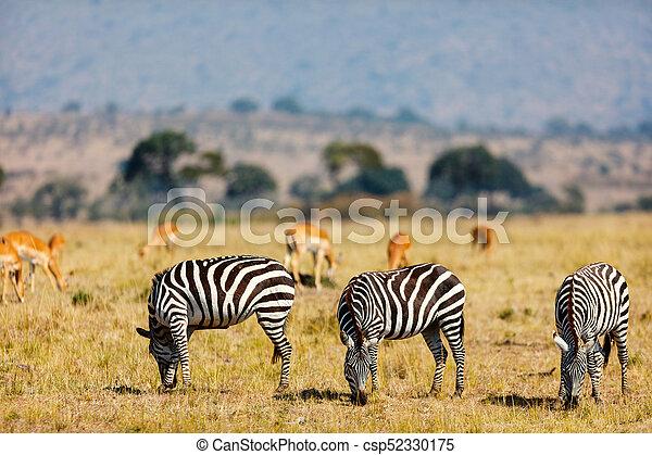 parc, zèbres, safari - csp52330175