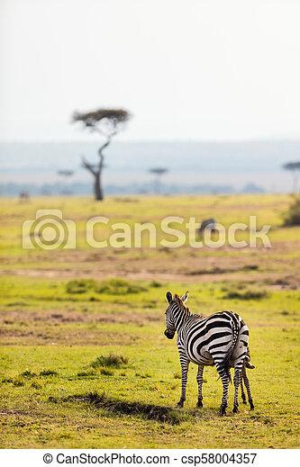 parc, zèbres, safari - csp58004357