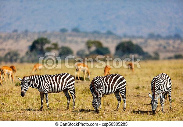 parc, zèbres, safari - csp50305285