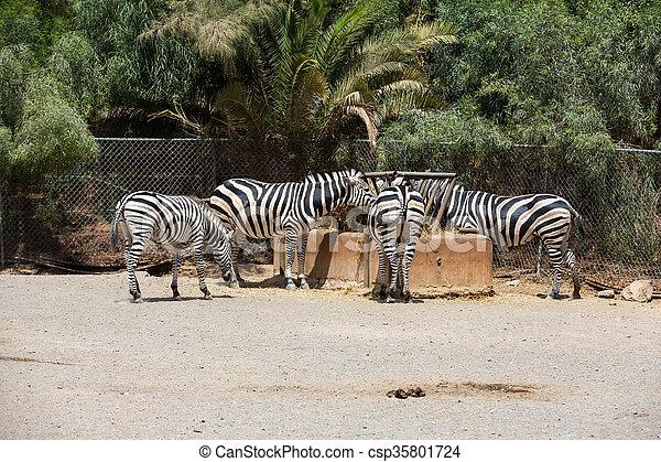 parc, zebra, safari - csp35801724