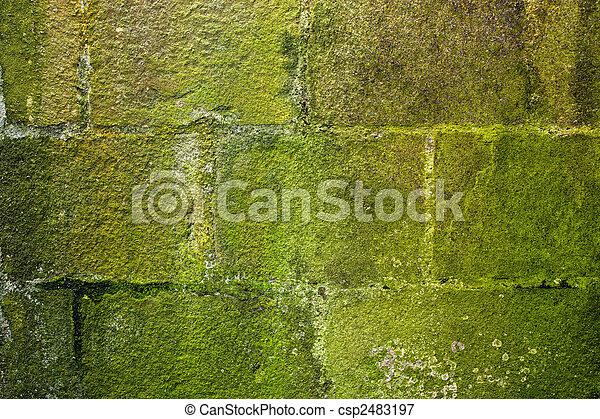 Musgo de piedra cubierto - csp2483197