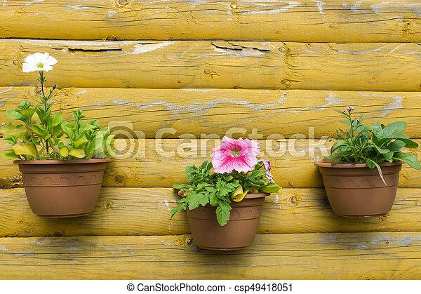 Pared Flores Macetas Pared Foto Flores Macetas