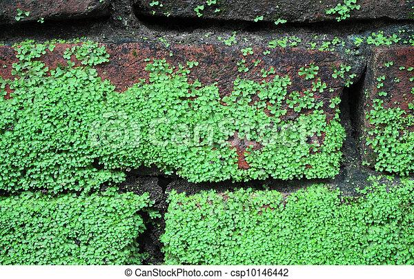 La pared de ladrillos con musgo - csp10146442