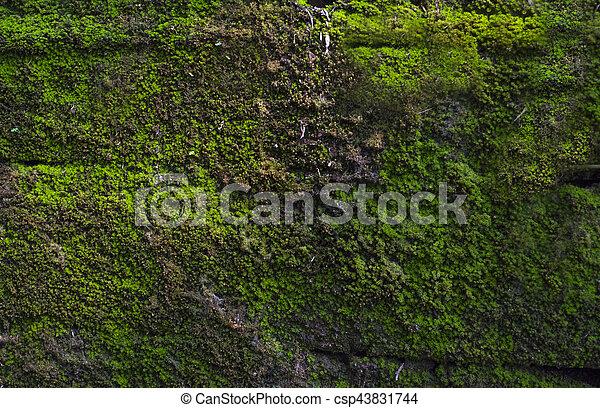 Moss en la pared, vuelta y salida - csp43831744