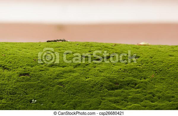 Moss en la pared - csp26680421