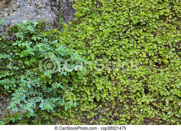 Moss en la pared - csp38021475