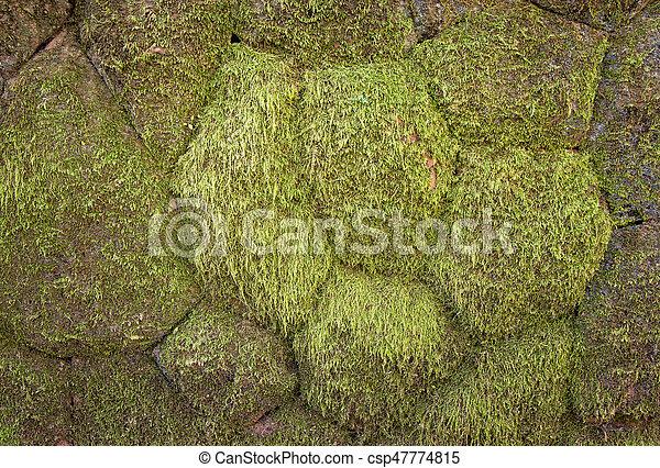 Moss en la pared - csp47774815