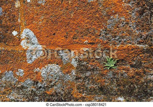 Moss y helecho en la pared de piedra - csp38018421