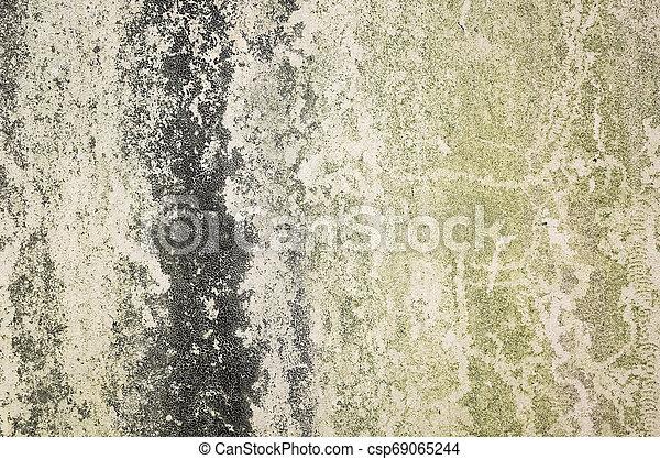 Antecedentes con musgo en la pared - csp69065244