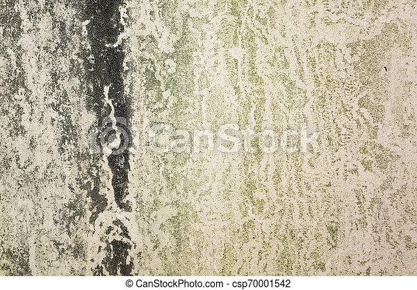 Antecedentes con musgo en la pared - csp70001542
