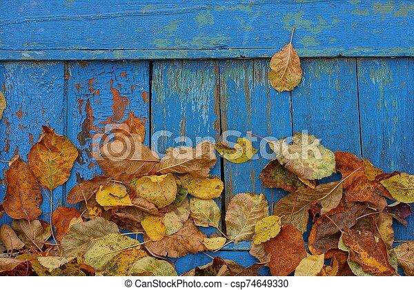 pared, tablas de madera, marrón, hojas, seco - csp74649330