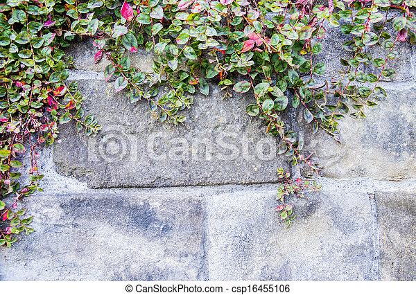 parede, pedra, videira - csp16455106