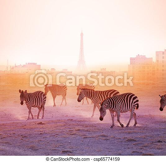 paris, marche, groupe, zèbres, fond - csp65774159