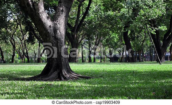 park, friedlich - csp19903409
