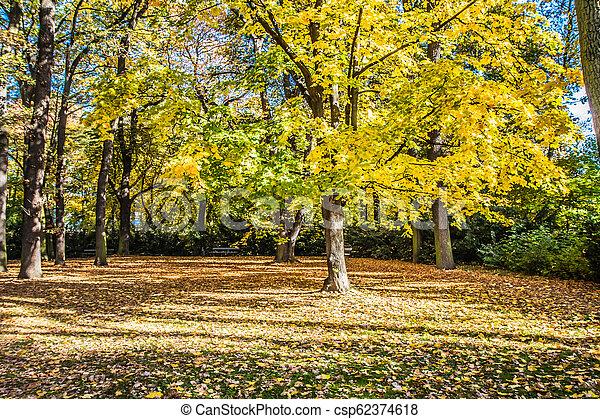 Park in autumn - csp62374618