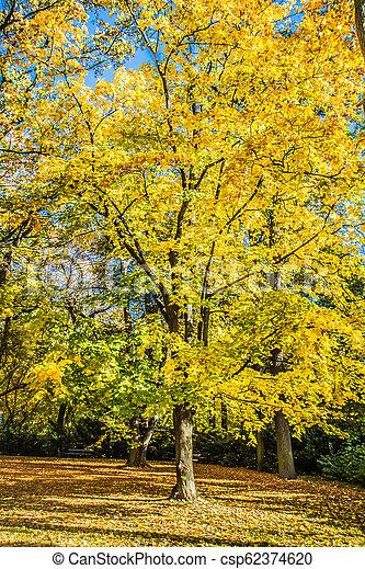 Park in autumn - csp62374620