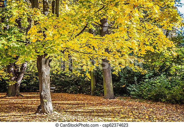 Park in autumn - csp62374623