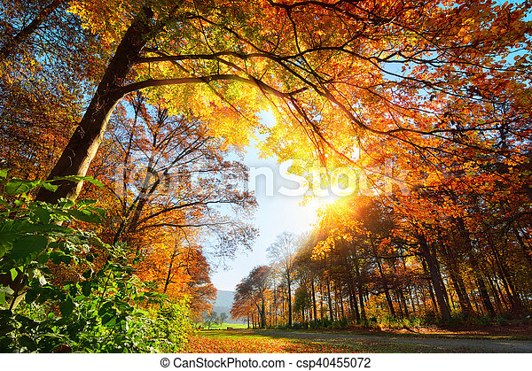 Park in autumn, with sun and blue sky - csp40455072