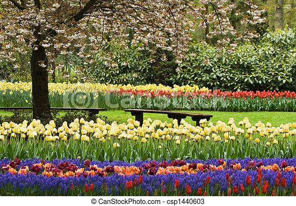 Park in spring - csp1440603