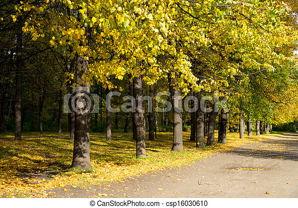 Park in the fall - csp16030610