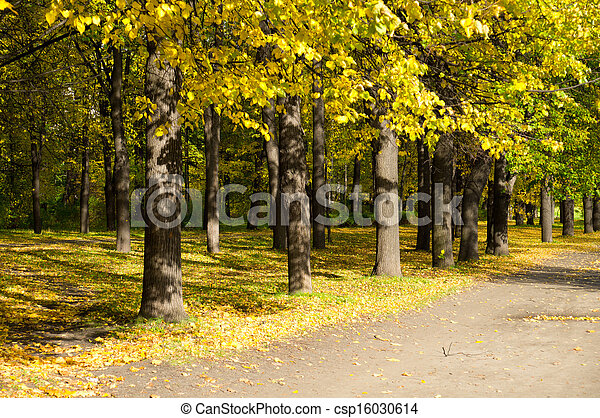Park in the fall - csp16030614