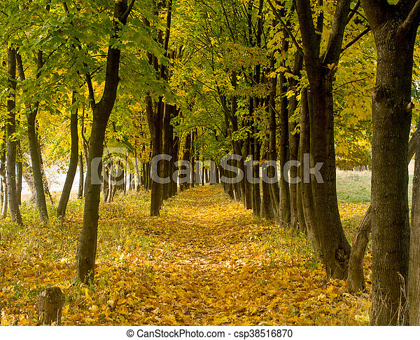 Park in the fall - csp38516870