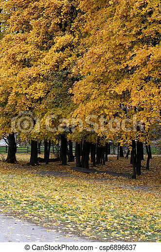 Park in the fall - csp6896637