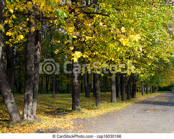Park in the fall - csp16030166
