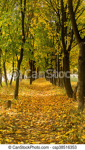 Park in the fall - csp38516353
