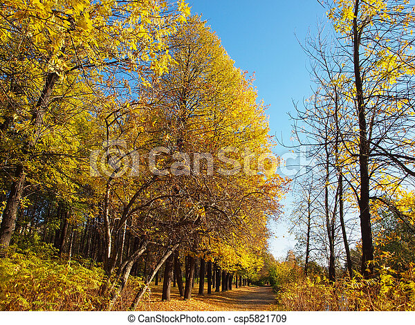 Park in the fall - csp5821709