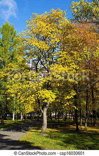Park in the fall - csp16030601
