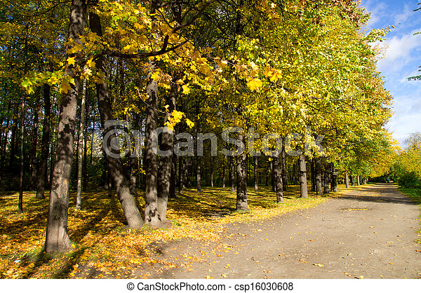 Park in the fall - csp16030608